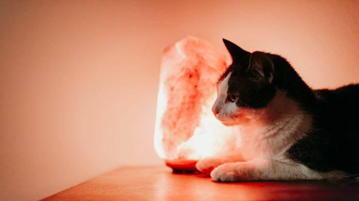 lampade di sale pericolose per i gatti