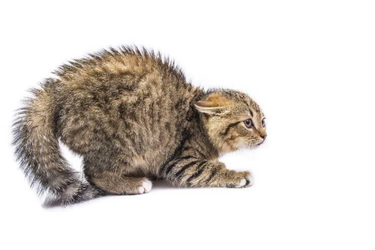 le paure del gatto