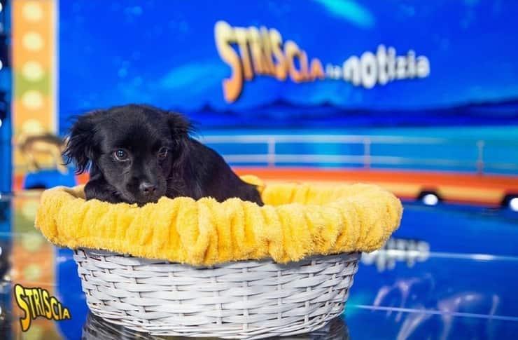 Mes il nuovo cane di striscia la Notizia