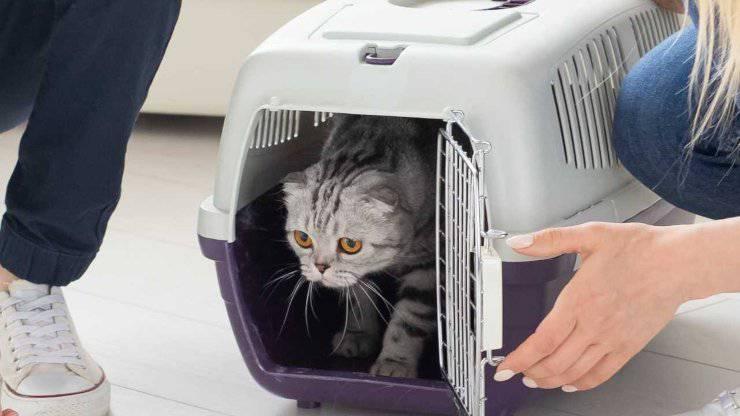nuovo gatto in casa