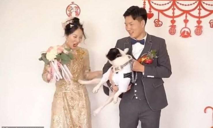 Cane prende a calci la sposa