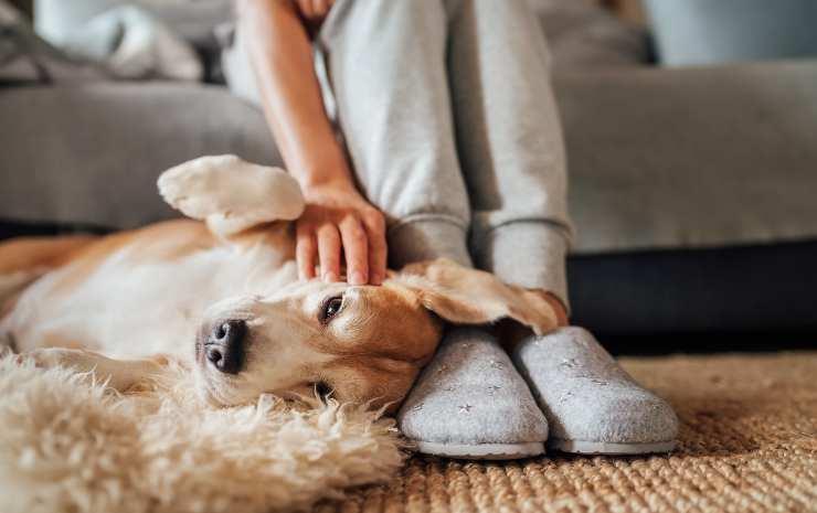 perché i cani mettono la testa sui piedi