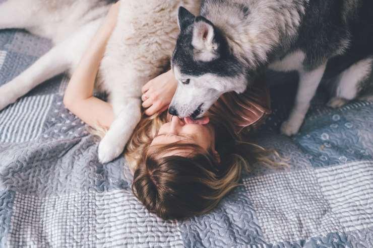 perché i cani sono felici quando ci leccano