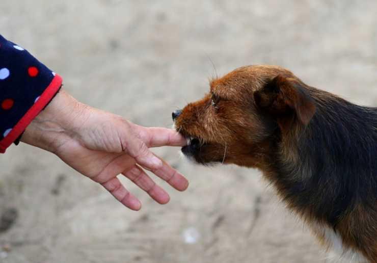 cane e mani