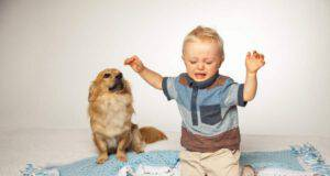 perché il cane si lamenta quando un bambino piange