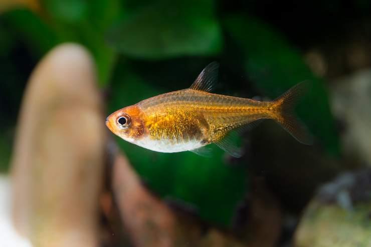 pesci d acquario adatti ai bambini