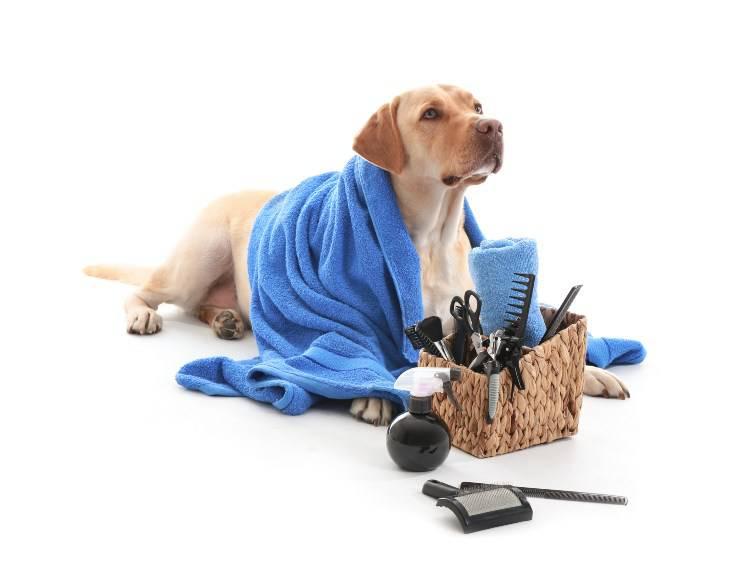 Prendersi cura del pelo del Labrador