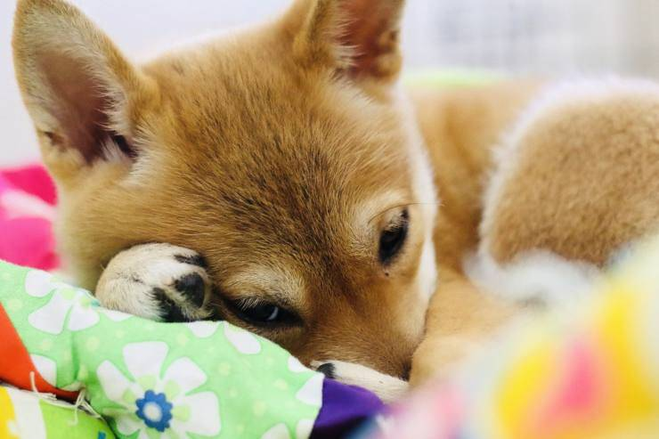 cane rifiuta adottare