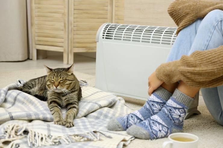 gatto e termosifone