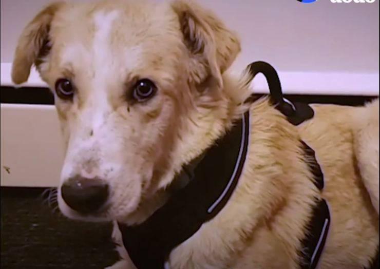 cane randagio terrorizzato umani