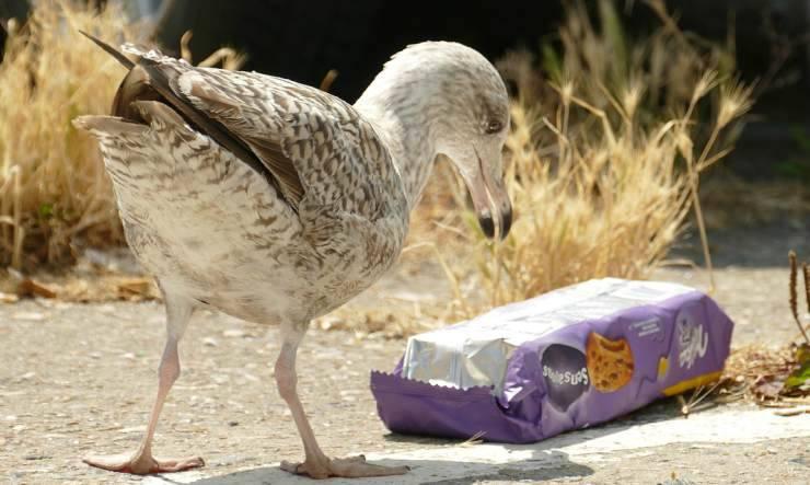Inquinamento da plastica (Foto Pixabay)