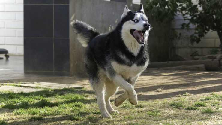 Il cane energico (Foto Pixabay)