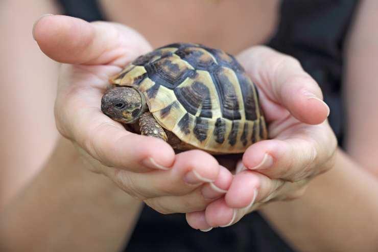 Come capire se la tartaruga è morta