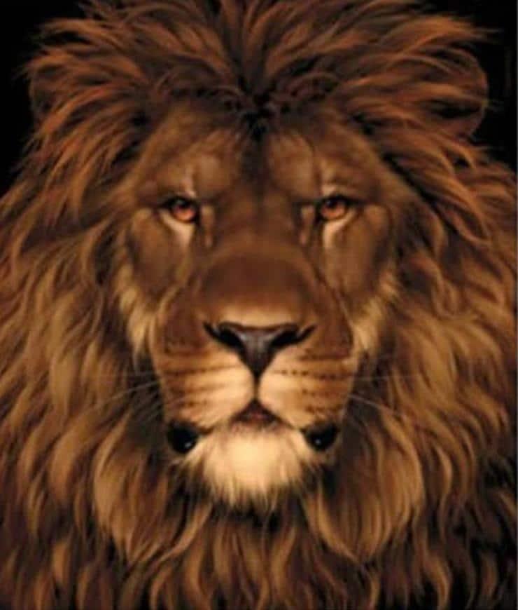 Test visivo :Riuscite a vedere il topo nascosto nel ritratto del leone?