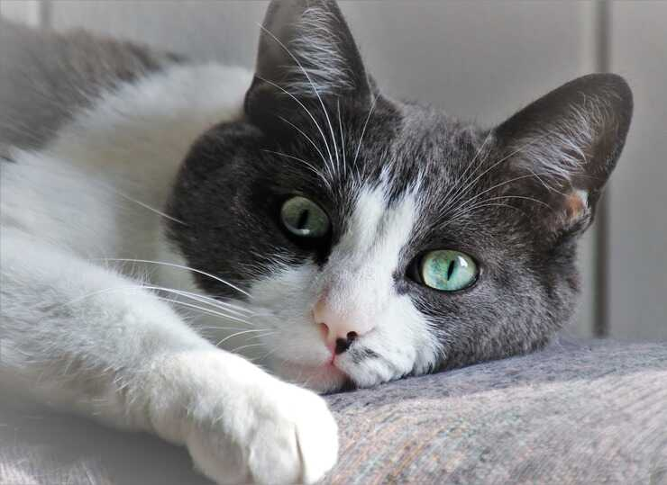 Calcoli renali nel gatto