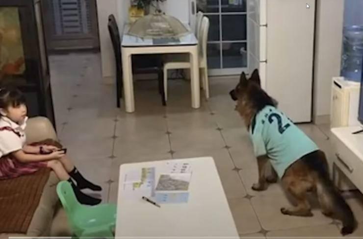 cane avverte bambina