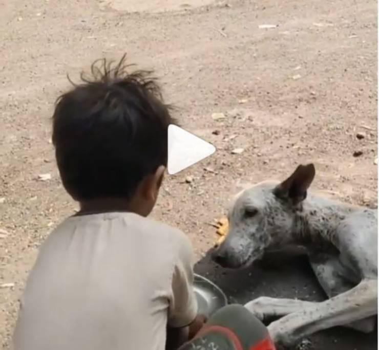 bambino porta acqua cane