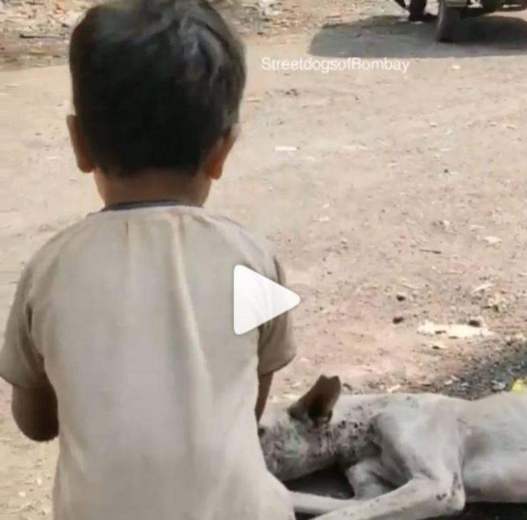 bambino cane randagio