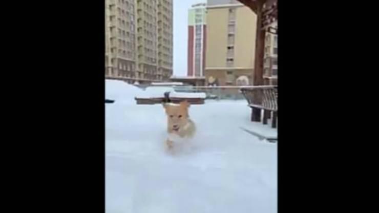 Il cane in primo piano (foto video)