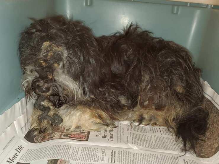 cane salvato 12 ore