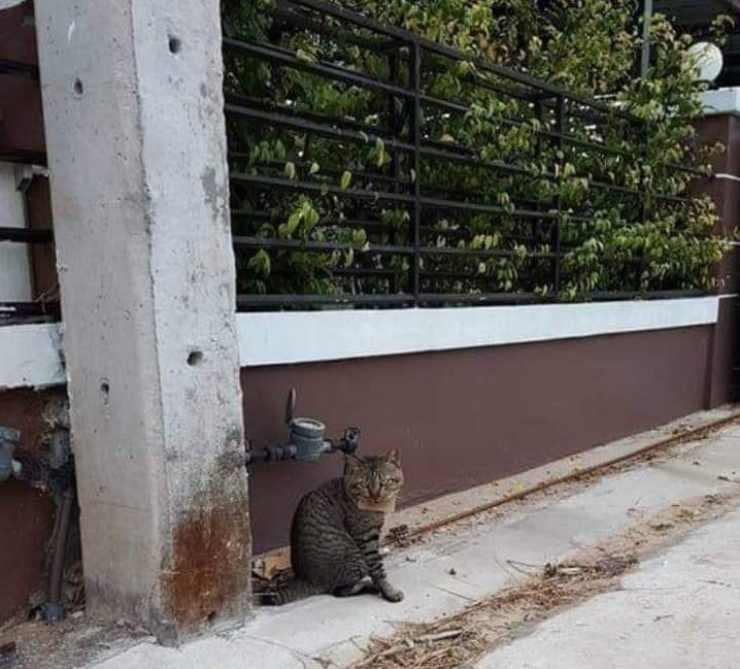 gatto sparisce tre giorni