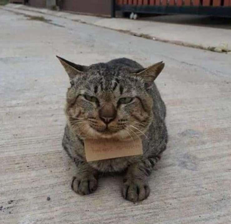 gatto sparisce torna debito