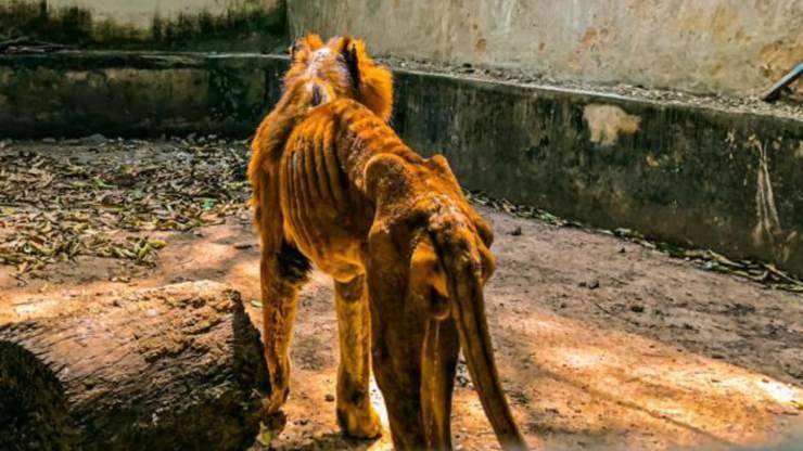 leone ombra