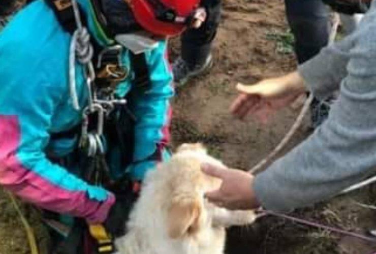 cane caduto pozzo artesiano