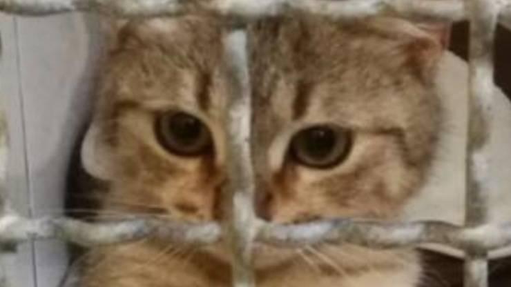 gatto chiuso gabbia