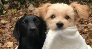 i cagnolini insieme (Foto Instagram)