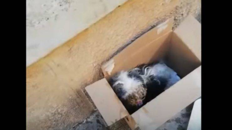 cagnolina abbandonata scatola pannolino