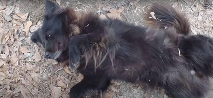 volontaria salva cane nove anni