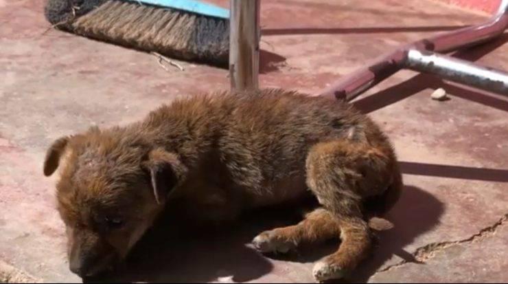 cucciola unica sopravvissuta