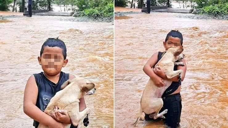 bambino cane in braccio