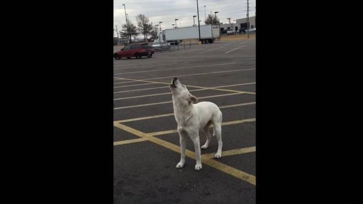 cane abbandonato parcheggio ulula