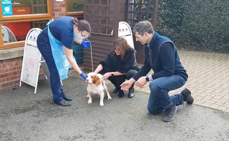 coppia riunisce cane rapito