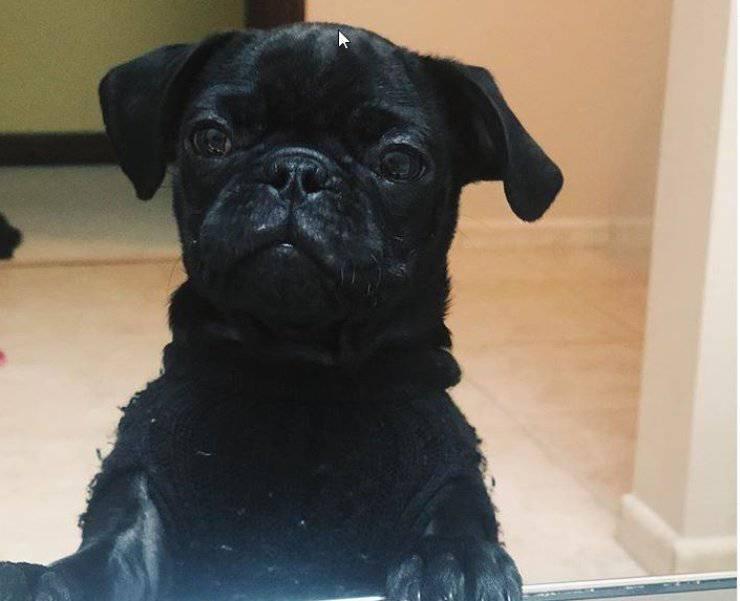 cane rincuora padrona bagno