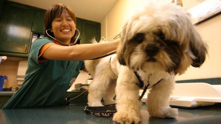 coprifuoco portare cane veterinario