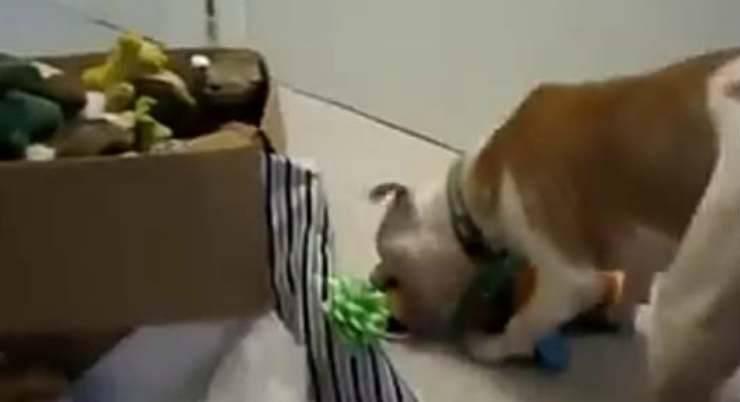 Wallace che gioca con il peluche (Foto video)