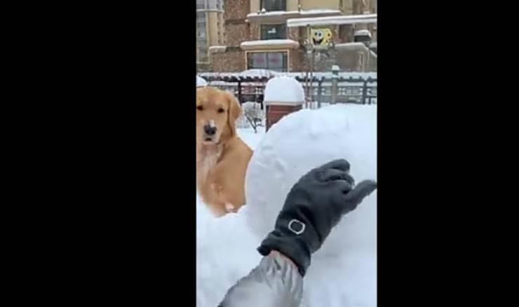 Il cane attento e curioso (Foto video)