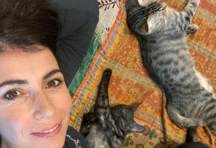 Giorgia e i suoi gatti (Foto Instagram)