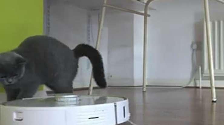Il gatto e l'aspirapolvere (Foto video)