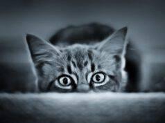 aliurofobia paura dei gatti
