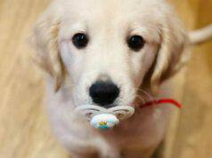 Il cucciolo e il ciuccio (Foto Instagram)