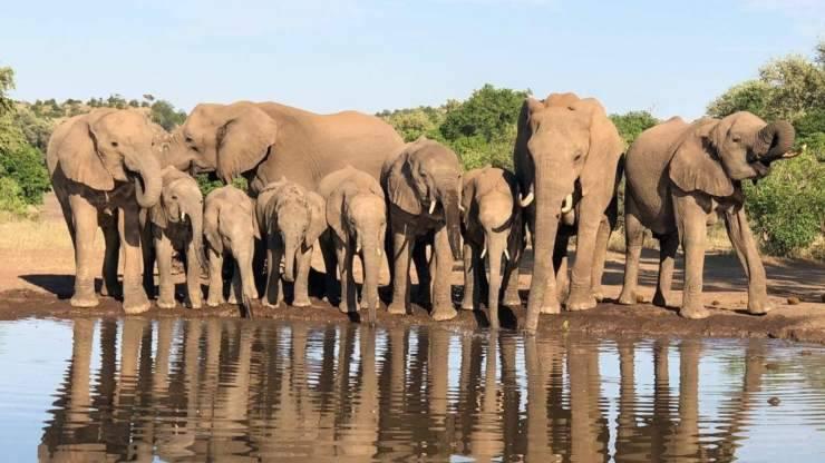 elefanti botswana angola
