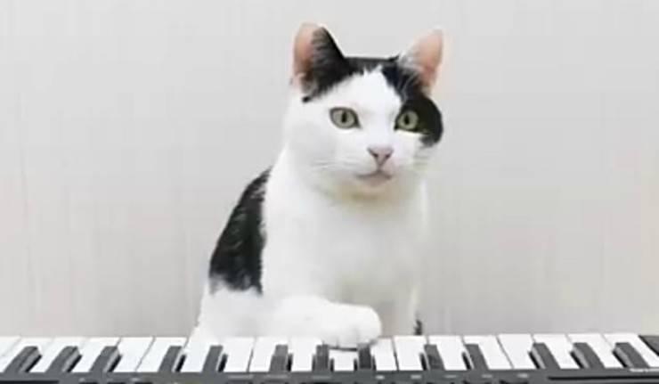 Il gatto in primo piano (Foto video)