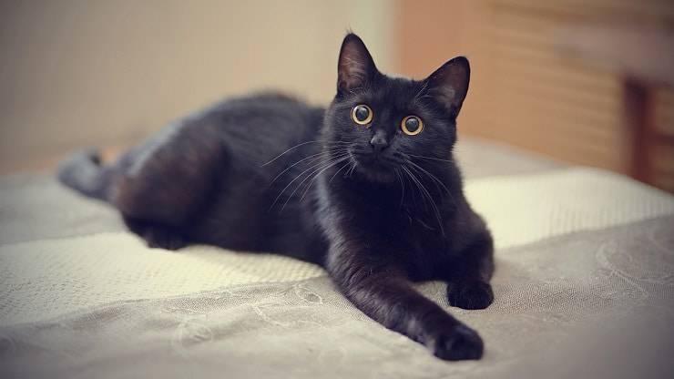 scegliere gatto nero