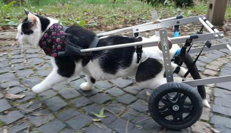 Il micio paralizzato (Foto Instagram)
