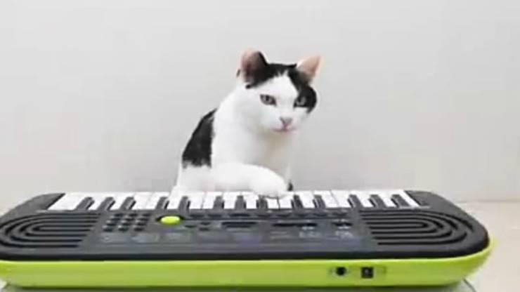 Il gatto talentuoso (Foto video)
