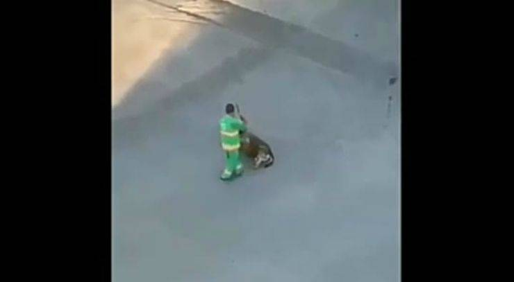 Il cane che si gode le coccole (foto video)